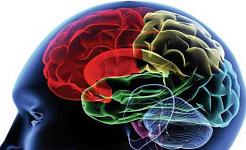 Является ли зависимость от мозговой болезни?