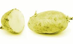 khoai tây mọc mầm xanh