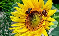 Plantera skyltar för blommor i din trädgård för att hjälpa fel i problem