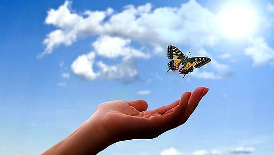 farfalla sopra una mano aperta e cielo aperto