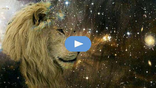 wajah singa menatap bintang-bintang