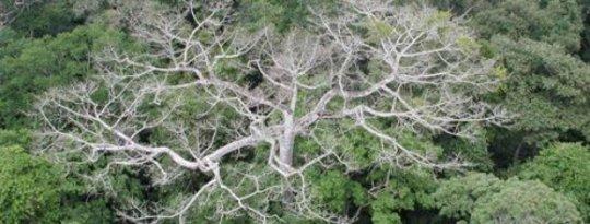 Mengubah tumbuh-tumbuhan di Amazon